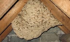Fjernelse af Hvepsebo
