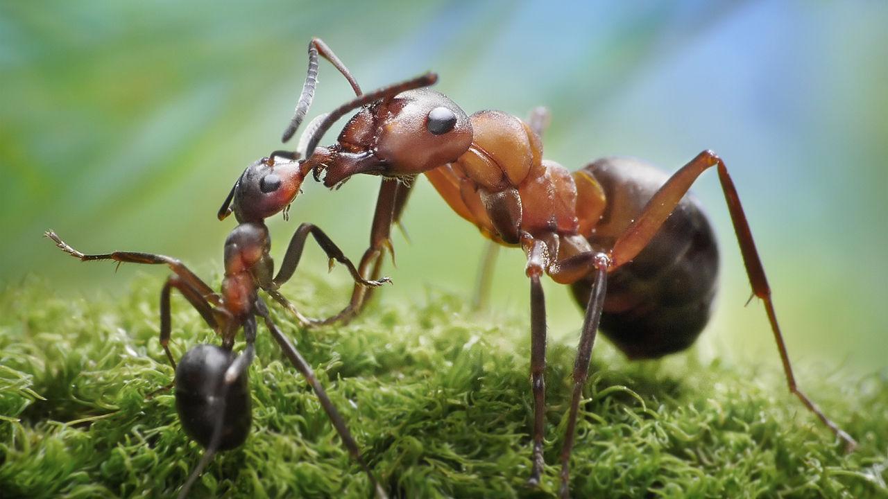 Myrer bekæmpelse